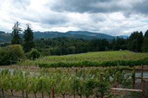 Another reason to visit Vancouver Island wineries: gorgeous landscapes