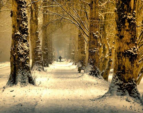Winter Walk, The Netherlands