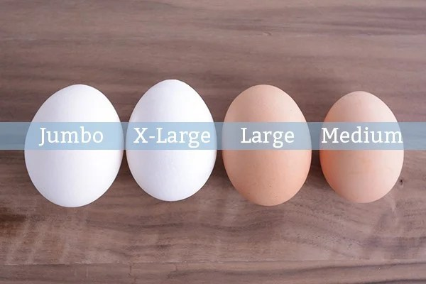 Lets Talk Egg Size Why It Matters