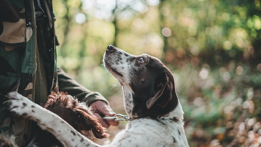 names for hunting dogs