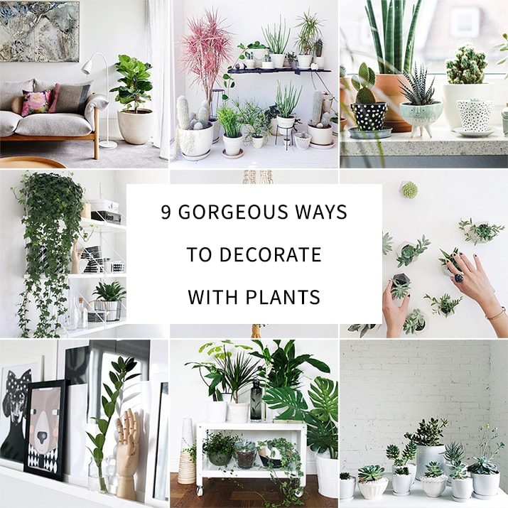 living room plant decor french country sofas 9 gorgeous ways to decorate with plants melyssa griffin