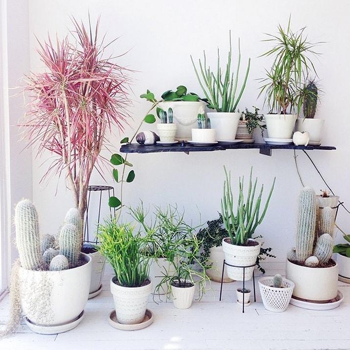 Image result for plant decor