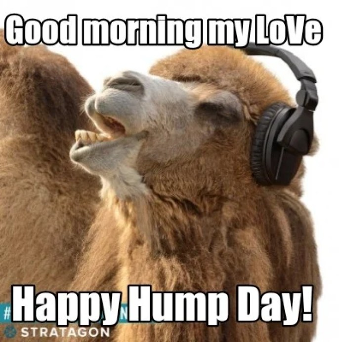 Meme Creator - Funny Good morning my LoVe Happy Hump Day! Meme Generator at  MemeCreator.org!