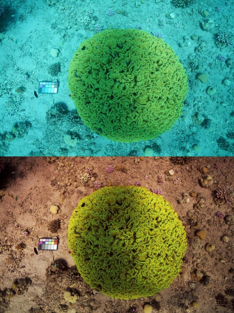 """Sea-thru"" technique reveals accurate detail of coral reef and marine floor by ""removing the water""."