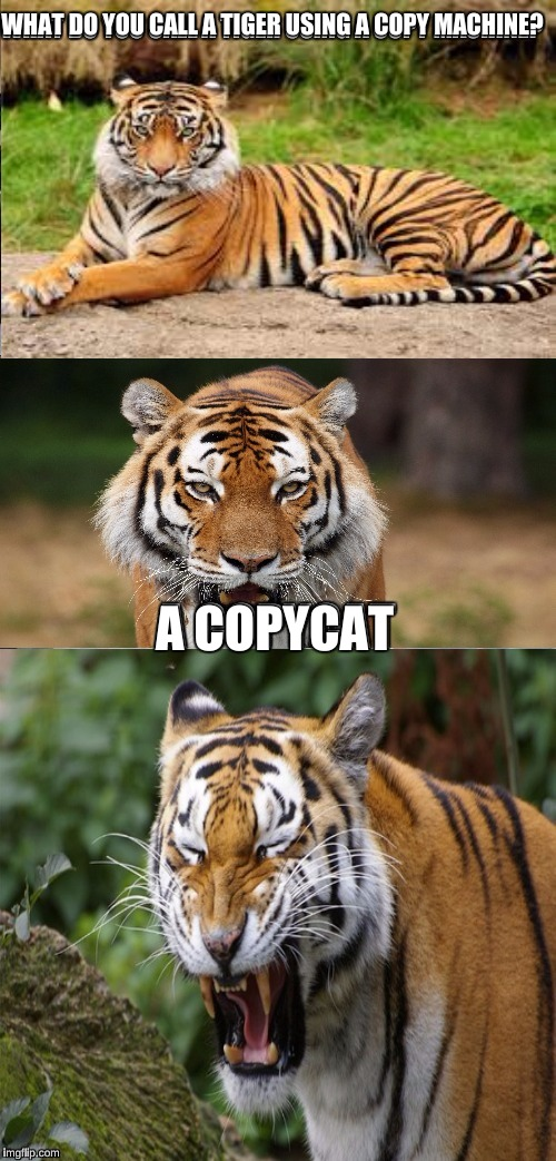 Cute And Funny Cat Wallpaper 19 Very Funny Tiger Meme Images And Pictures Memesboy