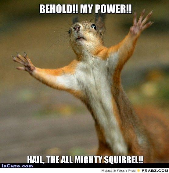 19 Funniest Squirrel Meme That Make You Smile MemesBoy