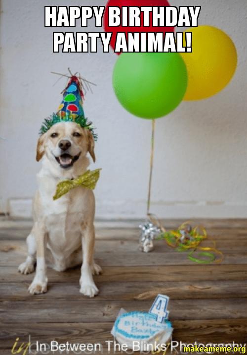 happy birthday animals meme