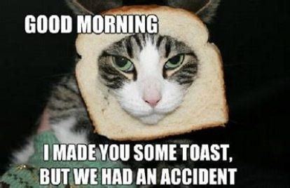 good morning cat memes funny