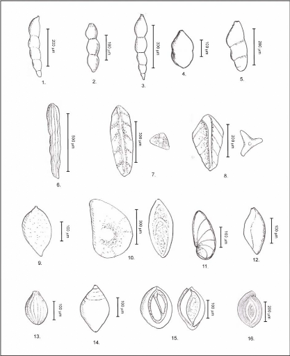 Planche Mollusques