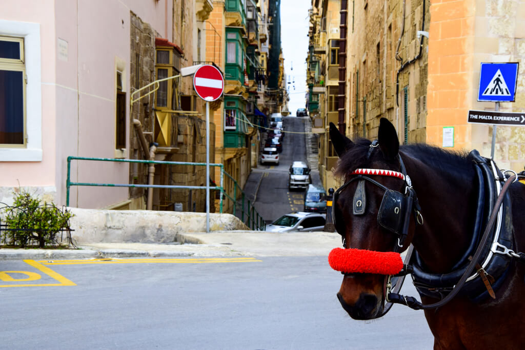 You can also ride in a horse carriage in Valletta.