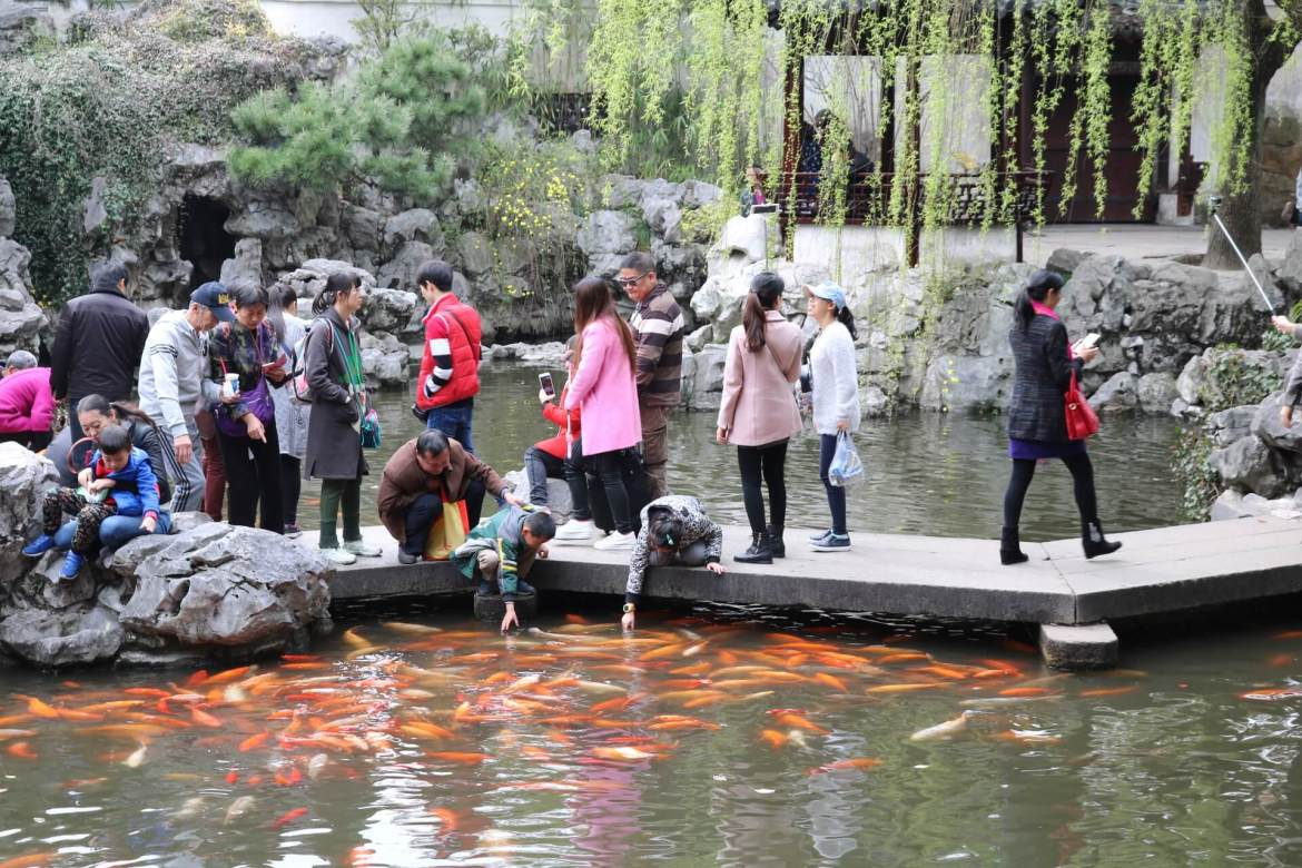 Children try to touch koi fish at Yu Garden.