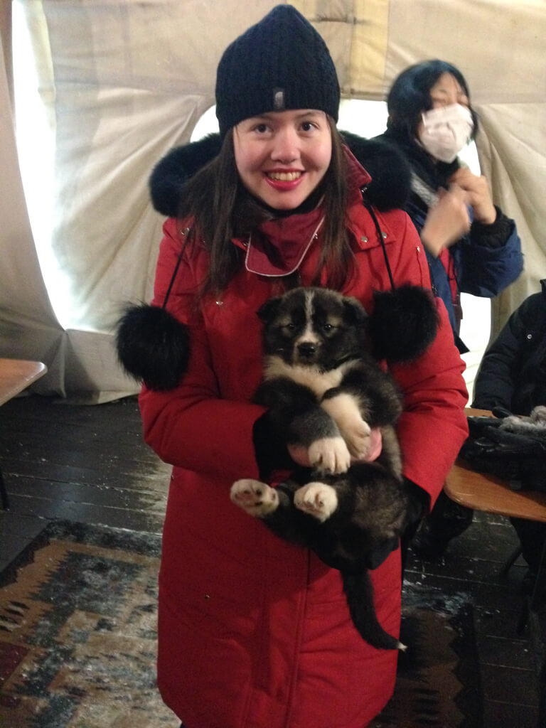 Visit Aurora Village in Yellowknife and meet adorable puppies!