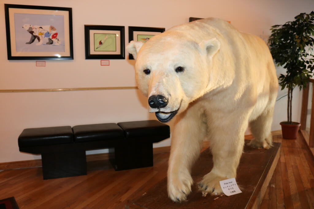 Polar bear at the Northern Frontier Visitors' Center in Yellowknife, Northwest Territories, Canada