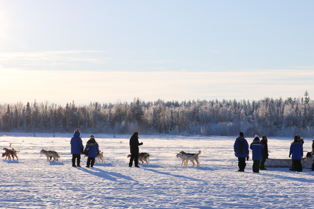 Dog team at Aurora Village in Yellowknife