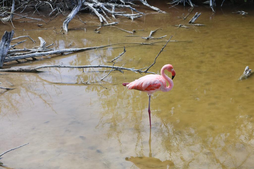 Flamingo Lagoon on Isabela Island