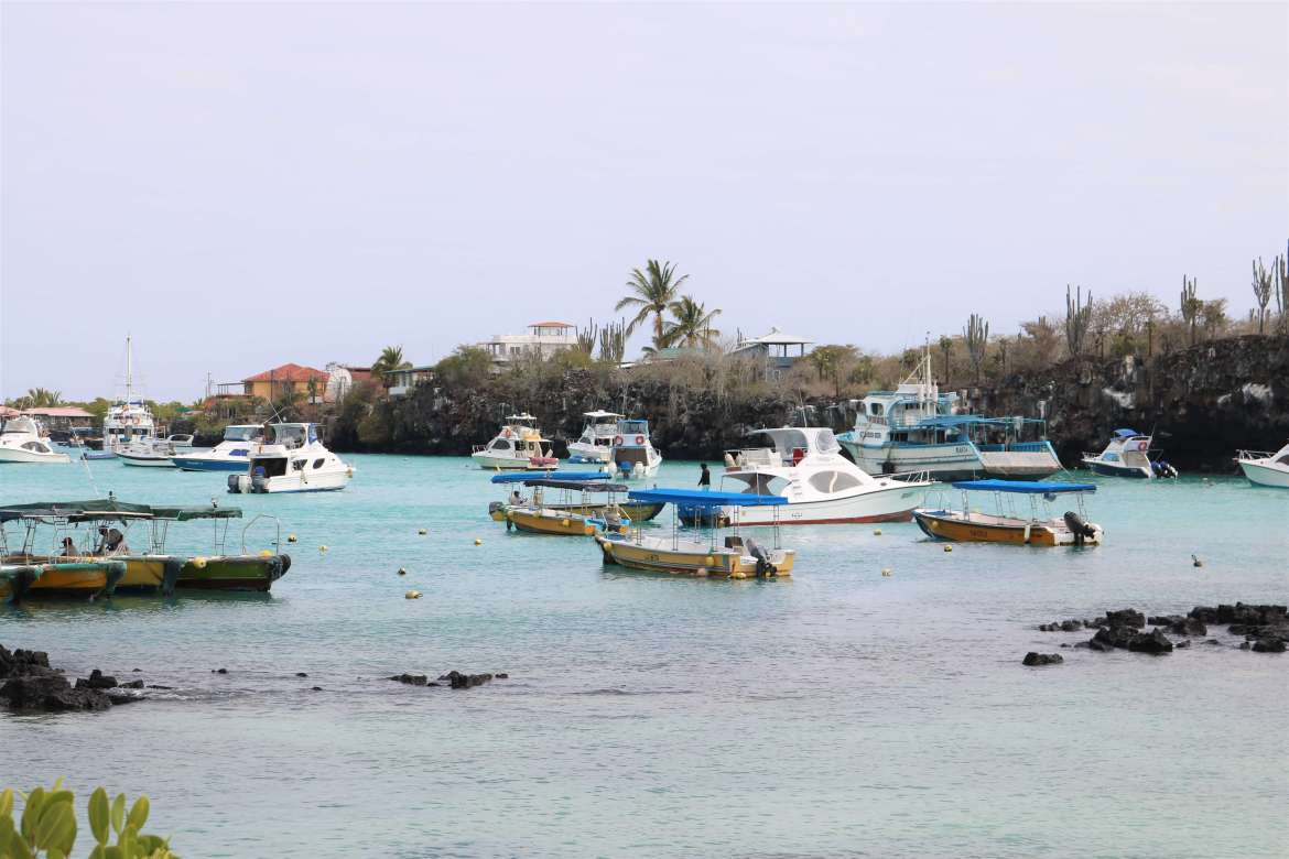 Yellow water taxis & white ferry speedboats in Puerto Ayora, Santa Cruz, Galapagos
