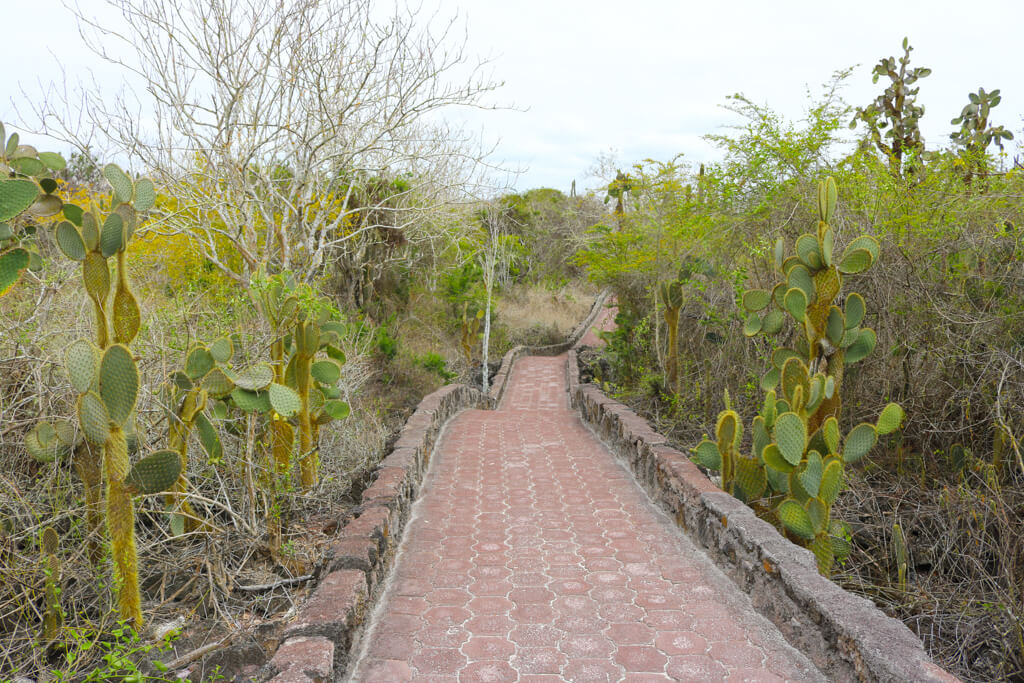 The red brick path to Tortuga Bay on Santa Cruz island, Galapagos