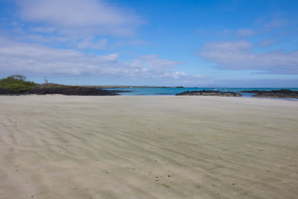 Playa El Garrapatero is a large beach on Santa Cruz Island in the Galapagos. You can bike there or take a taxi.