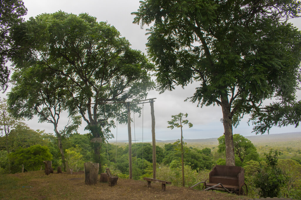 Swing over the highlands of Santa Cruz on the Columpio Magico in the Galapagos