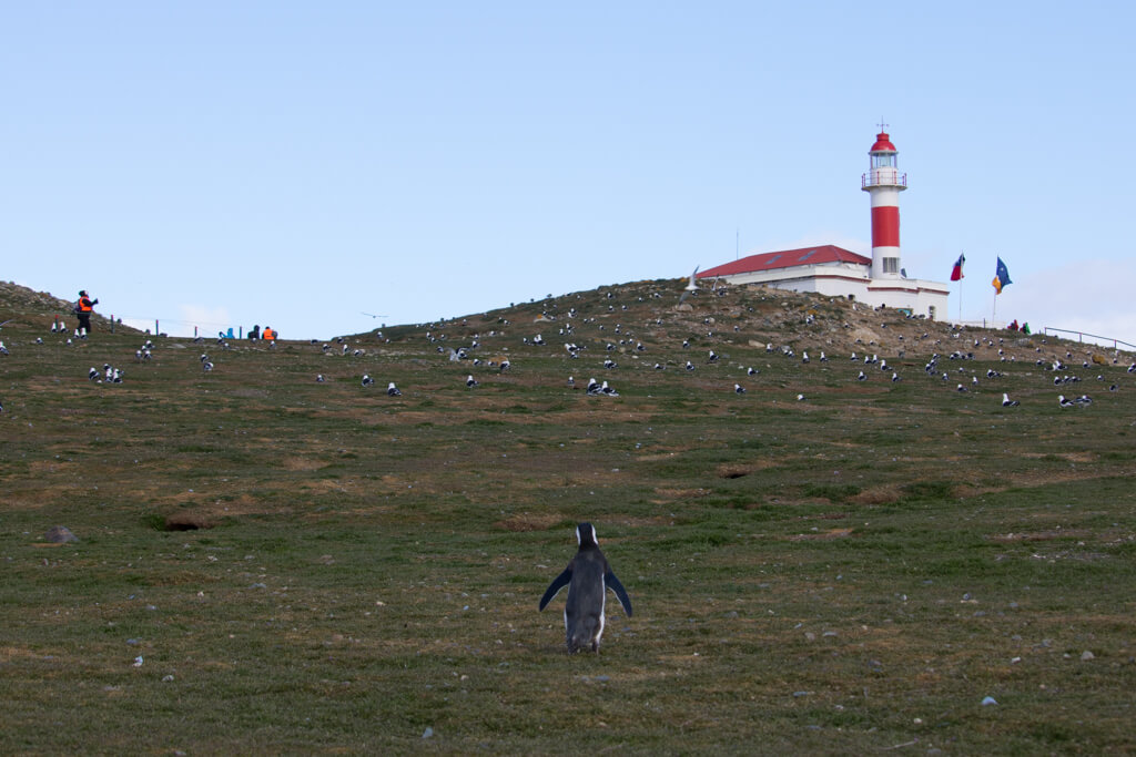 A penguin waddles towards the lighthouse on Isla Magdalena