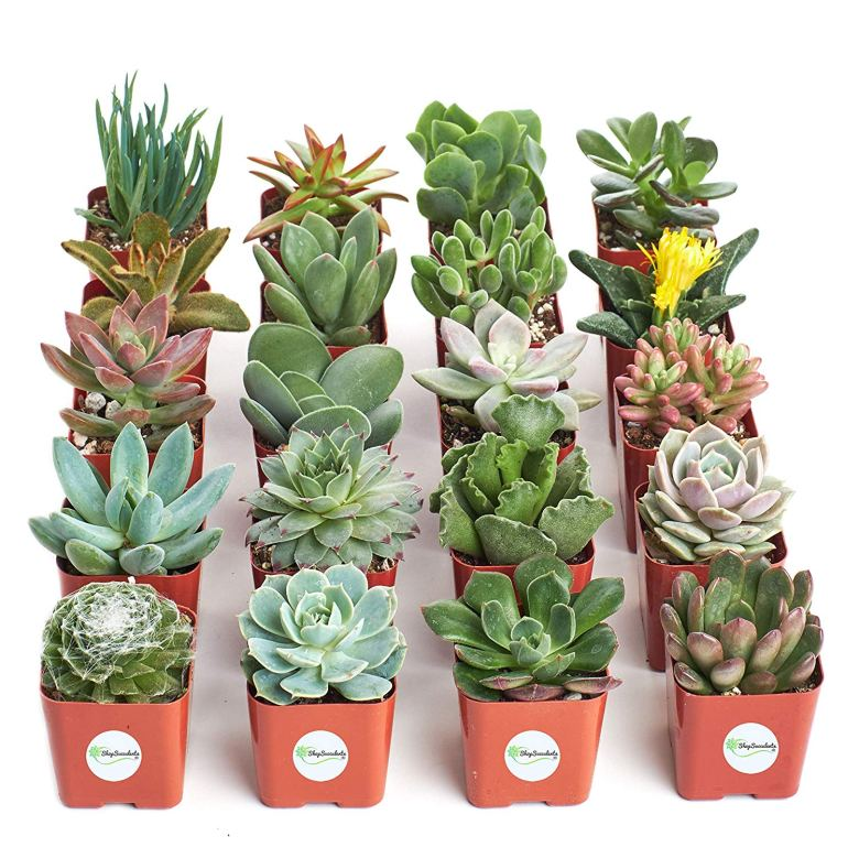 Succulents are great bridal shower game prizes