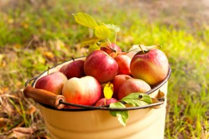 apple_picking