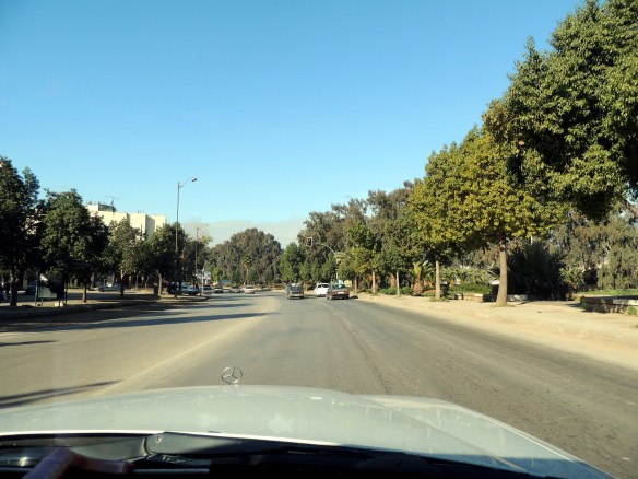 Olive groves are on both side of the road as you head northwest out of Fez.