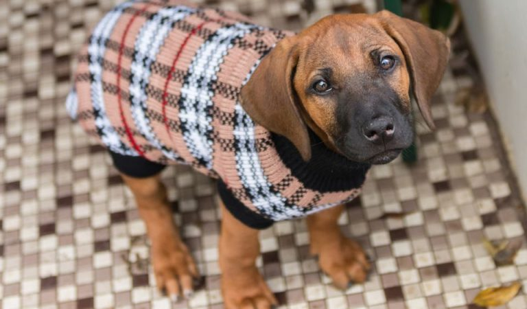 Tips to Keep Your Pet Healthy This Winter.