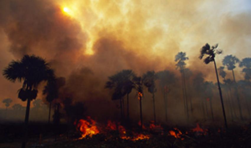 Climate strongly influences global wildfire activity