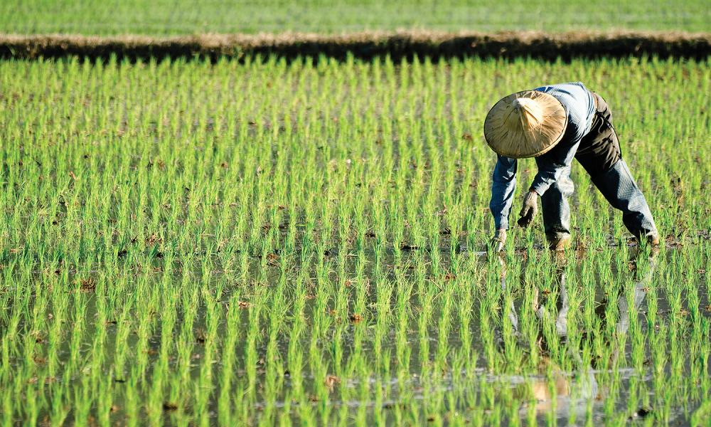Just how much foreign ownership of farmland is there?  |China Farmland