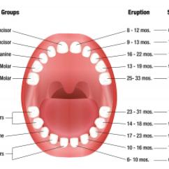 Health Tongue Diagram How To Make An Electron Dot W Mendon Ny, Family Dental