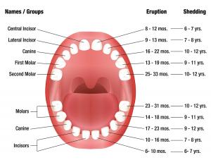 health tongue diagram 2001 dodge dakota trailer wiring w mendon ny, family dental