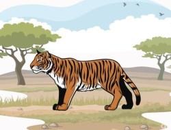 Harimau Sumatera Terkam Dua Ekor Kambing Milik Warga di Siak