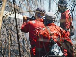 Kebanyakan Penyebab Kebakaran Hutan Akibat Ulah Manusia