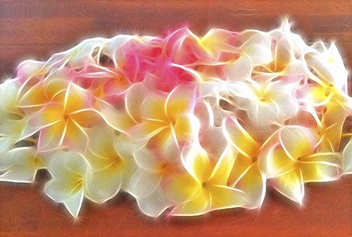 Plumeria in Paradise © lynette sheppard