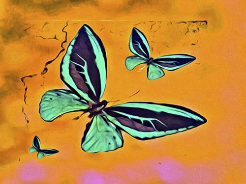 Butterflies Together © lynette sheppard