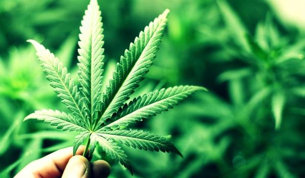 """Galeno de Pérgamo ya advirtió de que la marihuana """"seca el esperma"""""""