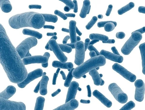 prostatitis bacteriana