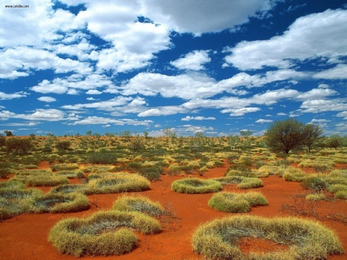 Científicos y aborígenes australianos crean preservativos y guantes quirúrgicos ultradelgados