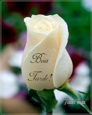 Msg Boa Tarde Com Flores Lindas Mensagens De Bom Dia