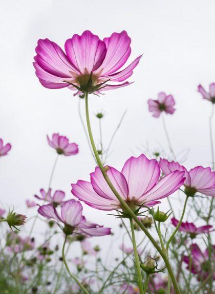 fotos e imagens de flores lindas
