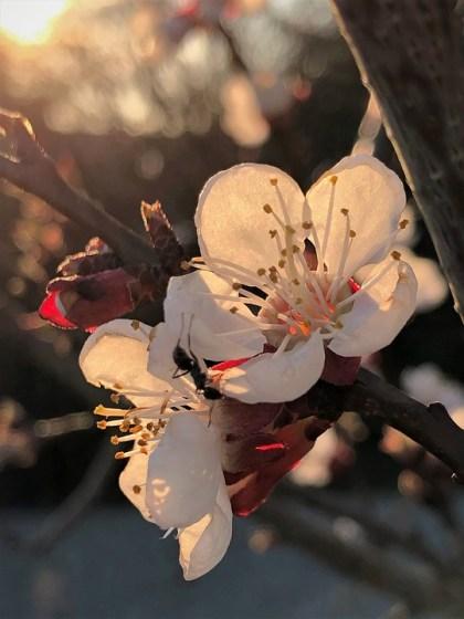 imagens de flores 9