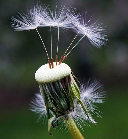 imagens de flores 10