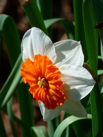 imagens de flores 13