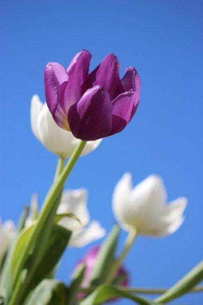 imagens de flores 17