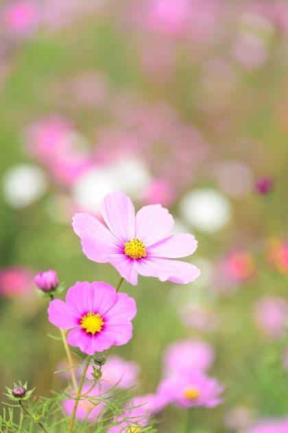 imagens de flores 22