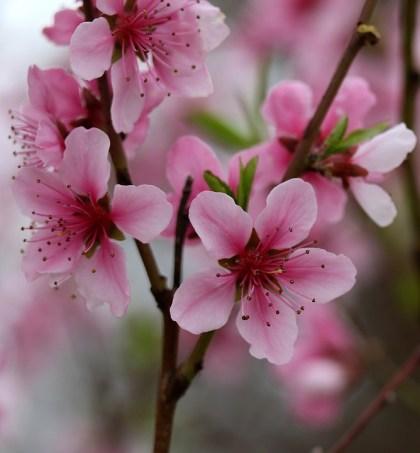 imagens de flores 27