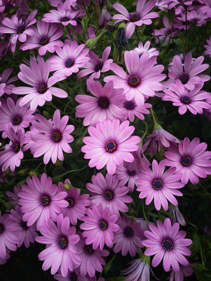 imagens de flores 29