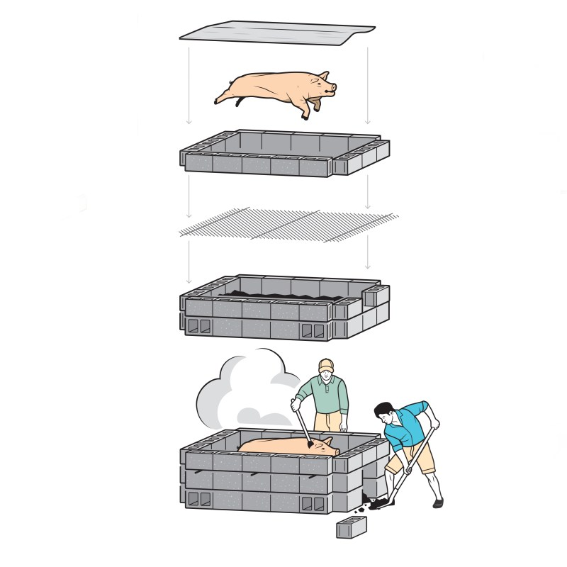 whole hog roast