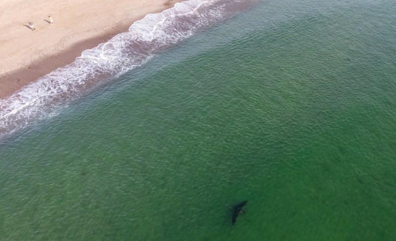 plage de requin